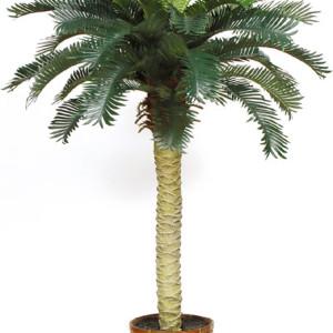 8' Silk Tree