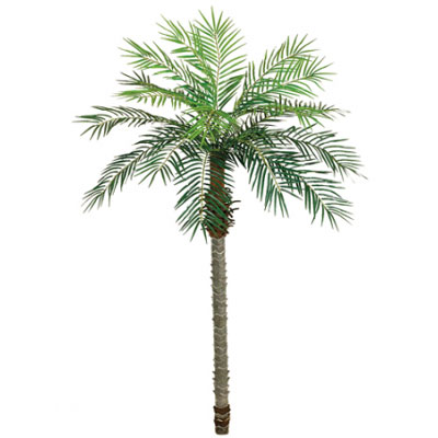 rent a palm tree on ohio at apex event production